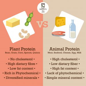 Infographic of plant protein vs animal protein