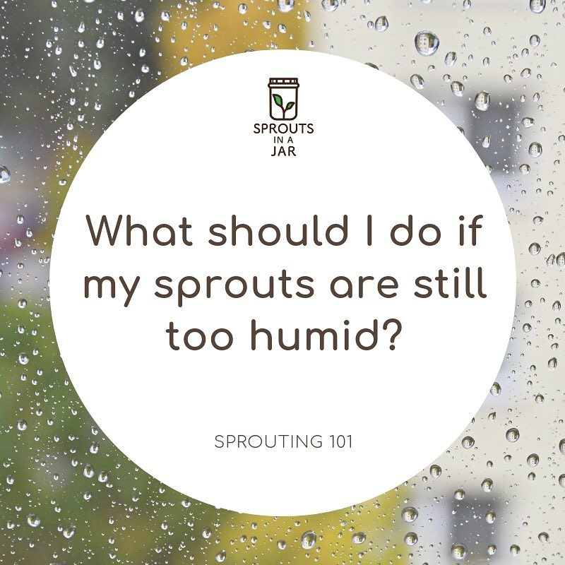 Sprouting 101: Sprouts are too humid