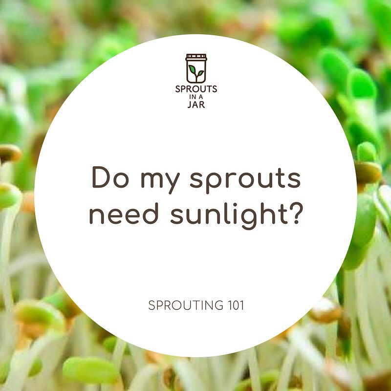 Sprouting 101: Do my sprouts need sunlight?