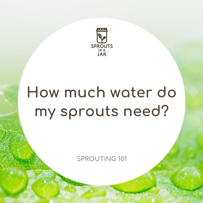 how much water do my sprouts need