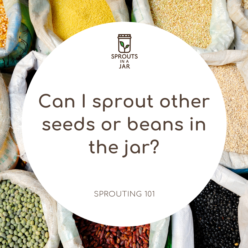 Sprouting 101: Can I sprout other seeds, grains or beans in the jar?