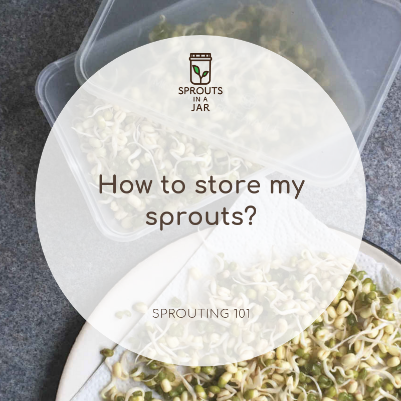 sprouts on paper towel and inside air tight container