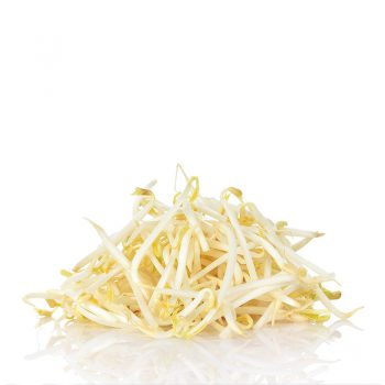 Grown Mung Bean Sprouts