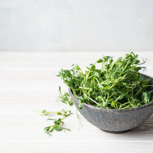 Grown Pea Shoots in Bowl
